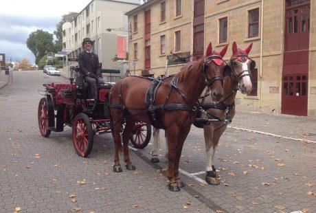 Our Horses Errol & Soxy on Salamanca Place